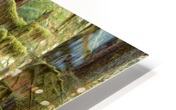 Moss covered tree in the Opal Creek Wilderness, Oregon HD Sublimation Metal print