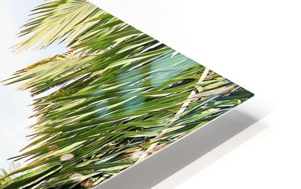 Nevis cactus HD Sublimation Metal print