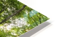 Panoramic image of a deciduous forest; Ontario, Canada HD Metal print