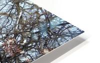 another narley old tree Impression metal HD
