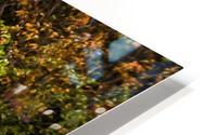 Nature in Fall HD Metal print
