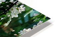 DazzleBlossoms HD Metal print