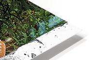 FawnBySaltBlock3 HD Metal print
