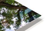 Oak Tree HD Metal print