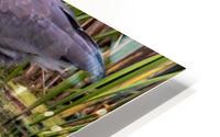 Great Blue Heron taking a Sip HD Metal print
