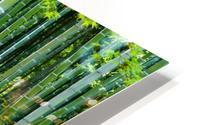 Bamboo Forest HD Metal print