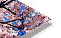 Cherry Blossom HD Metal print
