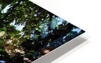Tropical Waters 1 HD Metal print
