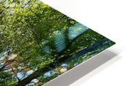 trail HD Metal print