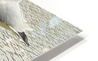 Mouette HD Metal print