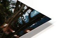 Cypress Tree Tunnel California Impression metal HD