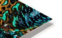 Giant Clam HD Metal print