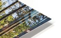 Stand of Trees HD Metal print