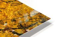 Yellow Tree Leaves HD Metal print