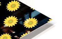 Sunflower (6)_1559876457.017 HD Metal print