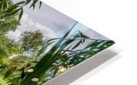 Summer Lake HD Metal print