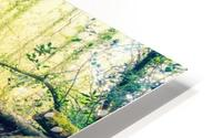 waterfall river nature forest  HD Metal print