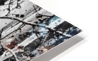 Birch Tree Forest HD Metal print