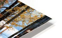 Autumn Three Maple Dr. Manchester VT HD Metal print