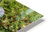 IMGP4902 HD Metal print