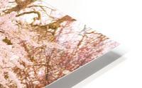 Blossom Tree HD Metal print