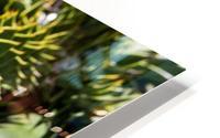 Plant Image HD Metal print
