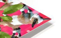 APPLE PICKIN - HD Metal print