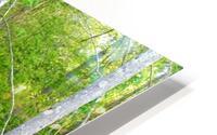Swamp in Carolina HD Metal print