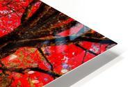 Red Carpet HD Metal print