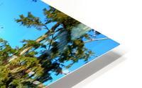 Reflect Much HD Metal print