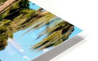 Swim or Not HD Metal print