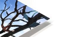 Driftwood Beach Panorama Shadows HD Metal print