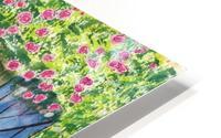 Rose cottage HD Metal print