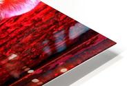 Rare Red Tiger HD Metal print