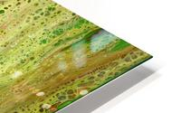 Forest HD Metal print
