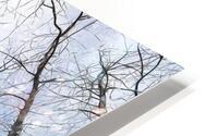 Winter Trees  HD Metal print