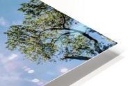 Zion Catching Rays HD Metal print