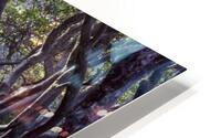 Tree lined Rhododendron walkway HD Metal print