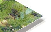 Pond HD Metal print