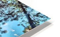 Tree Tops HD Metal print
