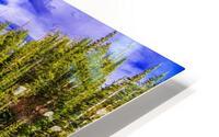 DSC00906 HD Metal print