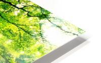 Ponthus Beech by Christophe Kiciak  HD Metal print