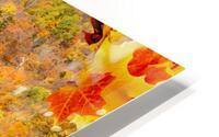 Abstract - Autumn II HD Metal print