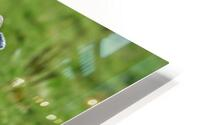 Donegal 28 HD Metal print