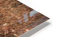 Orangutan HD Metal print