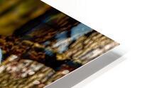 Fallow Deer 3 HD Metal print