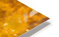 Lion HD Metal print