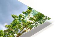 Perspective Approves HD Metal print