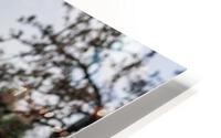 Flowers on the Hills HD Metal print