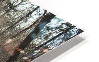 Snowy Trails HD Metal print